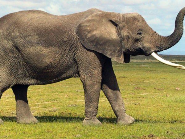 You cannot hide an elephant